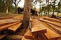 สวนชัชนาถรีสอร์ท - panoramio (3).jpg