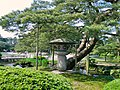 兼六園唐崎松 The Tangchi Pine in Jianliu Garden - panoramio.jpg