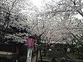 玖島城跡 - panoramio (7).jpg