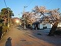 郡山市開成館 桜の季節.jpg