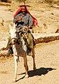 006 Camí del Siq (Petra), cavall vora el Wadi Mussa.jpg