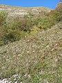01710 Thoiry, France - panoramio (44).jpg