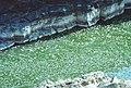 02-37-19, palouse river - panoramio.jpg