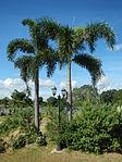 02397jfHour Great Rescue Concentration Camps Cabanatuan Park Memorialfvf 21.JPG