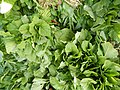 0251jfPanoramics Pulilan Fields Plants Philippinesfvf 31.JPG