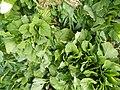 0251jfPanoramics Pulilan Fields Plants Philippinesfvf 31.JPG