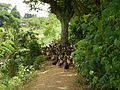 06659jfCandaba Pampanga Fields Duck Farming Bahay Pare Dulong Ilog Bulacanfvf 11.JPG