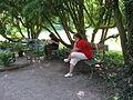 16 Zámek Veltrusy, kuchyňská zahrada.jpg