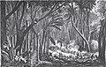 1872-03-16, La Ilustración Española y Americana, Isla de Cuba, Un combate en la manigua.jpg