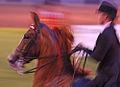 2009 Shelbyville Horse show (3867466981).jpg