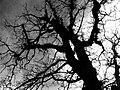 2010-365-340 Spooky Tree (5239582077).jpg