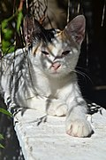 2012-09-03 Cat Relaxing Shadow Greece WiTi.jpg