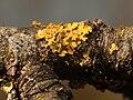 2014-02-17 13-03-55 lichens.jpg