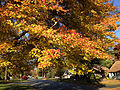 2014-10-30 09 38 15 Red Maple foliage during autumn in Ewing, New Jersey.JPG