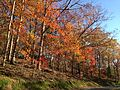 2014-11-02 14 53 09 Trees during autumn along Bear Tavern Road in Hopewell Township, New Jersey.jpg