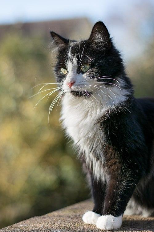 2015-12 Kitten on the lookout 01.JPG