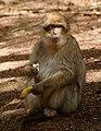 2016-04-21 13-43-29 montagne-des-singes.jpg