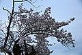 20160403 Himeji-Castle 3387 (26732244452).jpg