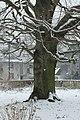 2017-02-11 ND27 Blutbuche Essen-Haarzopf 01.jpg