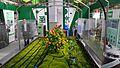 2017-04-20 Shouguang Vegetable SciTech Fair 1.014 anagoria.jpg