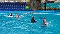 2017-05-16 Show in Kyiv Dolphinarium 15.jpg