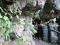 20190810Geranium robertianum2.jpg