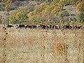 2433 Lobosh, Bulgaria - panoramio (25).jpg