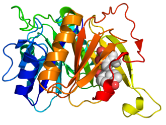 Biphenyl-2,3-diol 1,2-dioxygenase - Image: 2ZI8