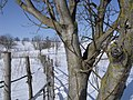 2 горіхи - panoramio.jpg