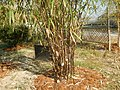43Lubao Bamboo Hub & Eco-Park Santa Catalina Pampanga 34.jpg