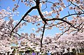 5 Chome-5 Ochiai, Tama-shi, Tōkyō-to 206-0033, Japan - panoramio.jpg