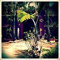 A-POIS Giuditta Nelli - Senegal 2012 - Île De Gorée, Dans le jardin de la CSAO.JPG