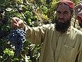 A Pakistani farmer from the Balochistan Province picks grapes.jpg