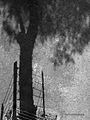 A Sombra da Árvore.jpg
