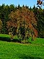 A Special Tree - panoramio.jpg
