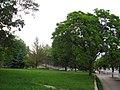 A green glade at Kiev st near Lyceum C. Porumbescu - panoramio.jpg