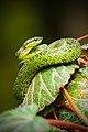 A green snake coiling a leaf (Unsplash).jpg