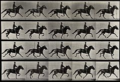 A horse trotting. Photogravure after Eadweard Muybridge, 188 Wellcome V0048736.jpg
