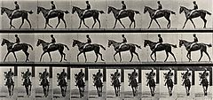 A jockey riding a race-horse. Photogravure after Eadweard Mu Wellcome V0048732.jpg