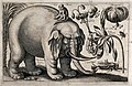 A large elephant with a monkey on its back and various flowe Wellcome V0044039.jpg