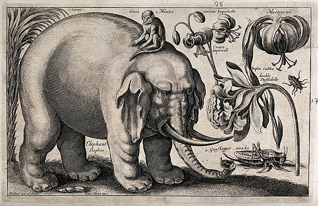 A large elephant with a monkey on its back and various flowers and insects. Etching by W. Hollar, 1663, after himself.
