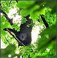 A pók a hálóját magasan és jó huzatos helyen feszítette ki. - panoramio.jpg