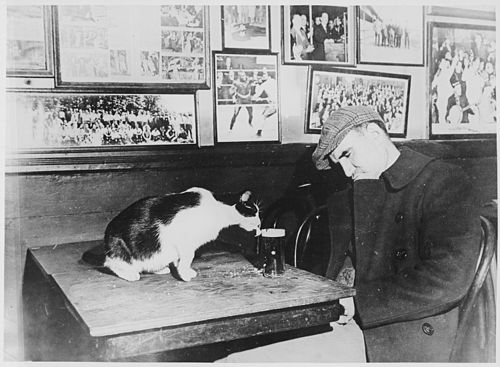 "A patron of ""Sammy's Bowery Follies,"" a downtown bar, sleeping at his table while the resident cat laps at his beer, 12- - NARA - 541905.jpg"