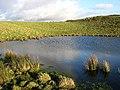 A pond on Loch Hill - geograph.org.uk - 683143.jpg