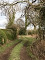 A promising path - geograph.org.uk - 726806.jpg