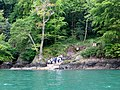 A queue for the ferry^ Dartmouth castle - May 2015 - panoramio.jpg