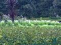 A scene of botanical garden Ooty 14.jpg