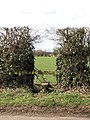 A stile in the hedge - geograph.org.uk - 1764739.jpg