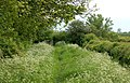 A verdant bridleway south of Tomlow - geograph.org.uk - 1325523.jpg