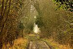 A walk on the wild side - RSPB Fowlmere (25514162470).jpg